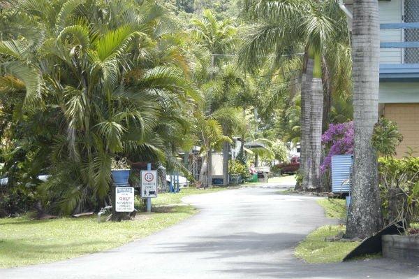 driveway-lined-palms